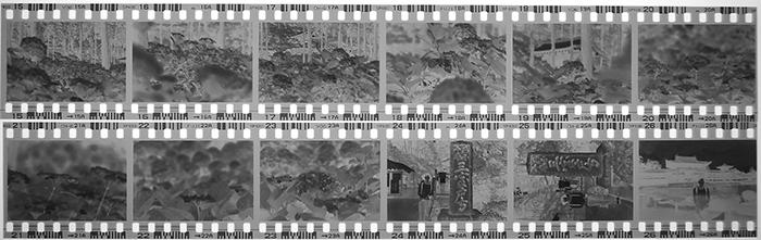 白黒ネガフィルム